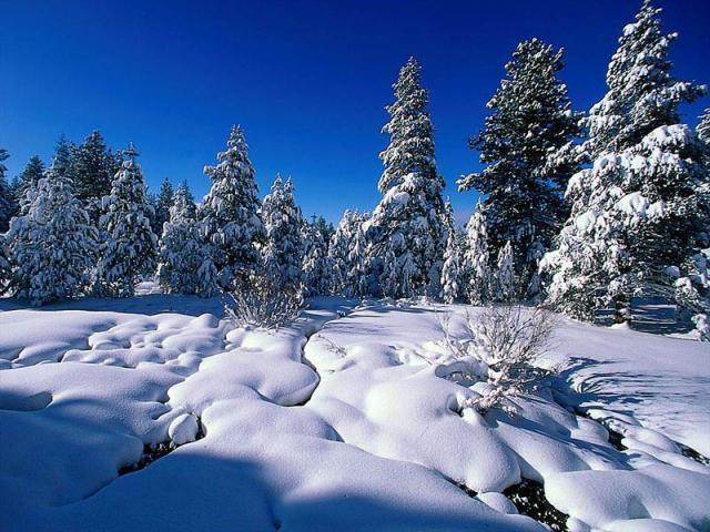 зима почивка