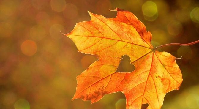 Жълтото доминира тази есен