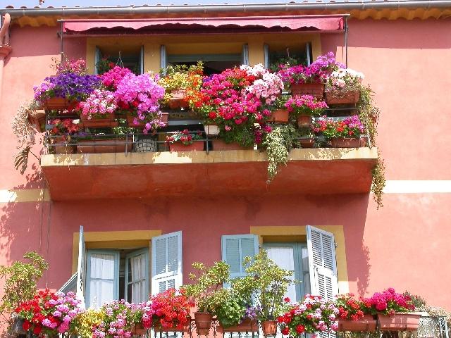 Отглеждане на цветя на балкона