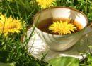 Глухарче - билка и красиво цвете